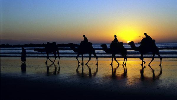 Kamele am Strand in der Abenddämmerung