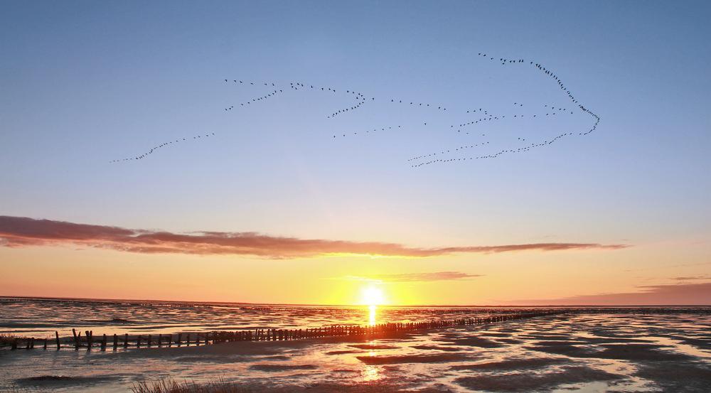 Wenn die Sonne über dem Wattenmeer untergeht, haben nicht nur die vorbeiziehenden Vögel etwas zu bestaunen