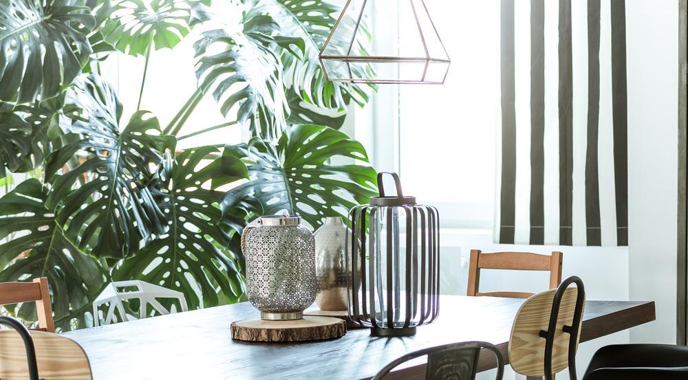 Grüne Deko: Mit diesen Pflanzen sieht ihr Zuhause stylisch aus