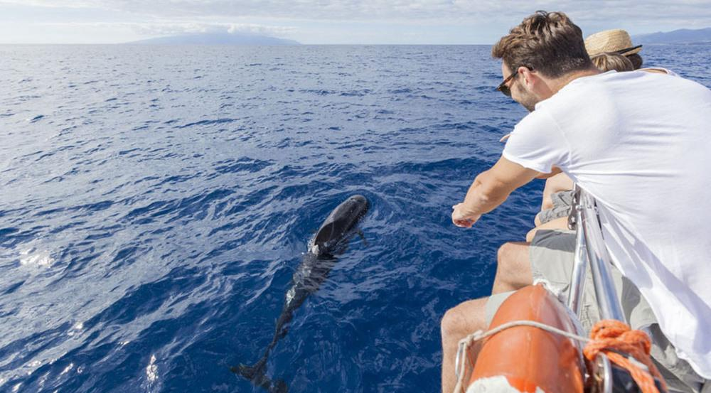Auf Teneriffa lassen sich das ganze Jahr über Wale und Delphine beobachten