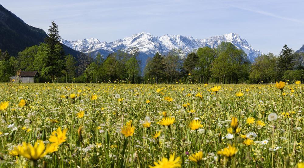 Sommerwiese mit Blick auf Alp- und Zugspitzland