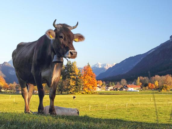 Frische Bergluft und grüne Wiesen - Urlaub im Allgäu ist sehr gefragt