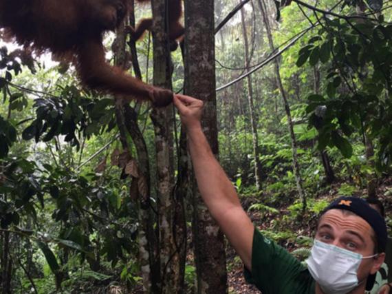 Hollywood-Star Leonardo DiCaprio besuchte auf Sumatra eine Orang-Utan-Auffangstation