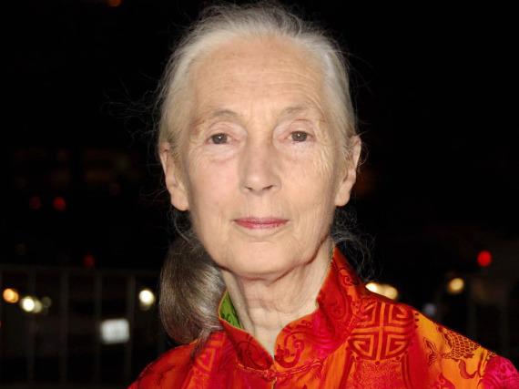 Jane Goodall - neben Dian Fossey (Gorillas) und Birute Galdikas (Orang-Utans) die bedeutendste Primatenforscherin