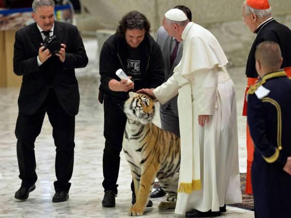 Papst Franziskus mit einem Zirkustiger bei einer Audienz am Donnerstag