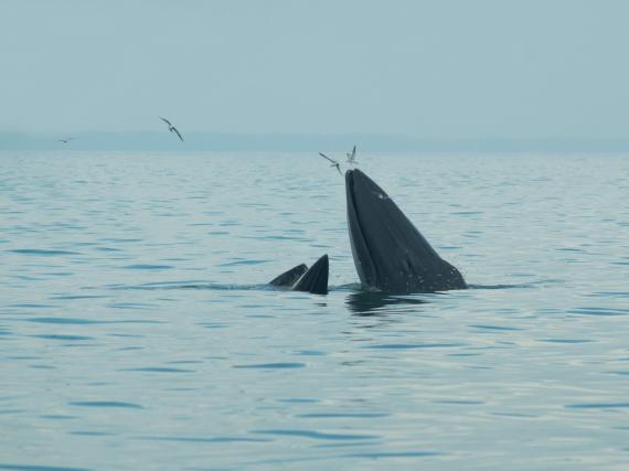 Wale in der freien Wildbahn
