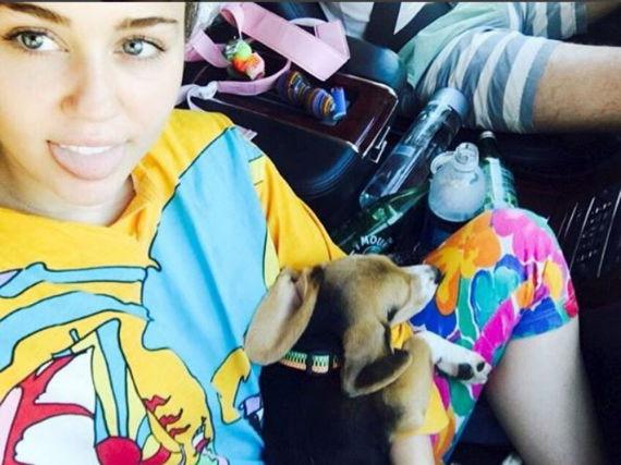 Miley Cyrus und Beagle-Dame Barbie haben es sich im Auto bequem gemacht