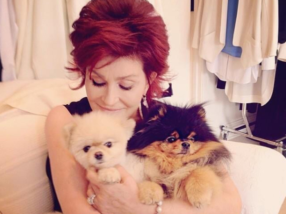 Sharon Osbourne vergöttert ihre Hunde