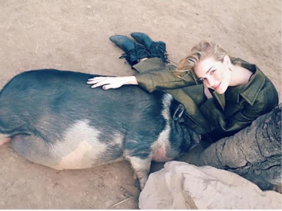 Rosie Huntington-Whiteley schmust beim Besuch einer Demeter-Farm mit diesem Schwein