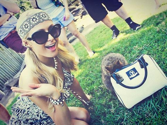 Geht es hier mehr um Paris Hilton und ihre Tasche oder um den kleinen