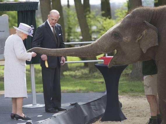 Elizabeth II. füttert im Zoo von Whipsnade einen Dickhäuter namens Donna